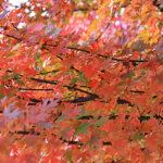 leaves2_102808