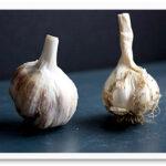 garlic_120609