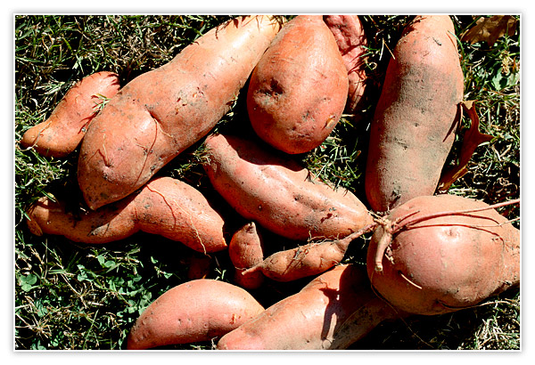 At least there are Sweet Potatoes