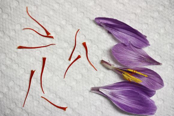Saffron 4