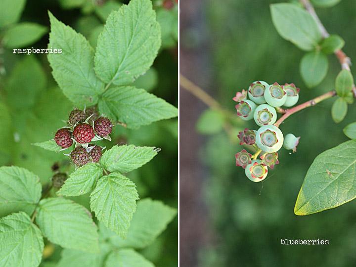 raspberries + blueberries
