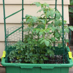 5-tips-container-gardening-featured