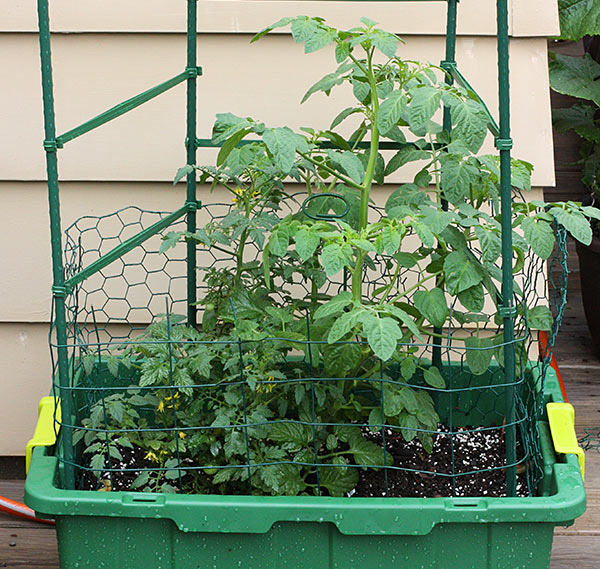 5 Tips for Successful Container Gardening