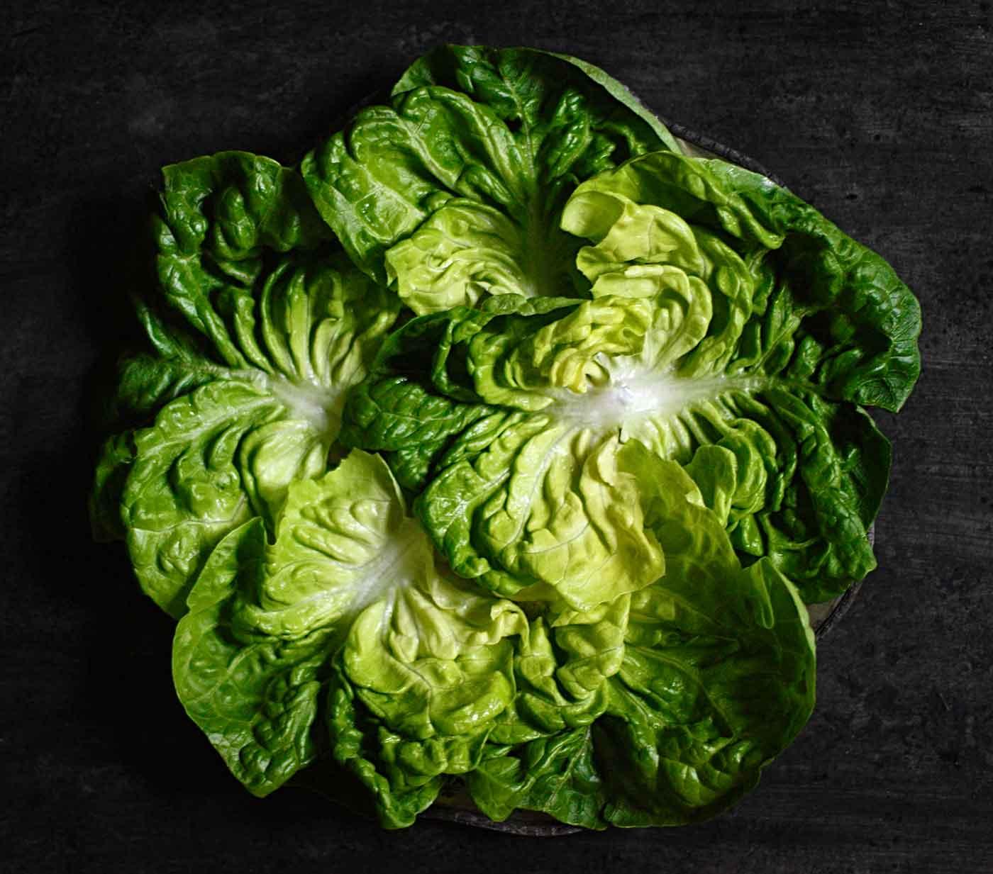 Leaves of Boston lettuce arranged in a ring
