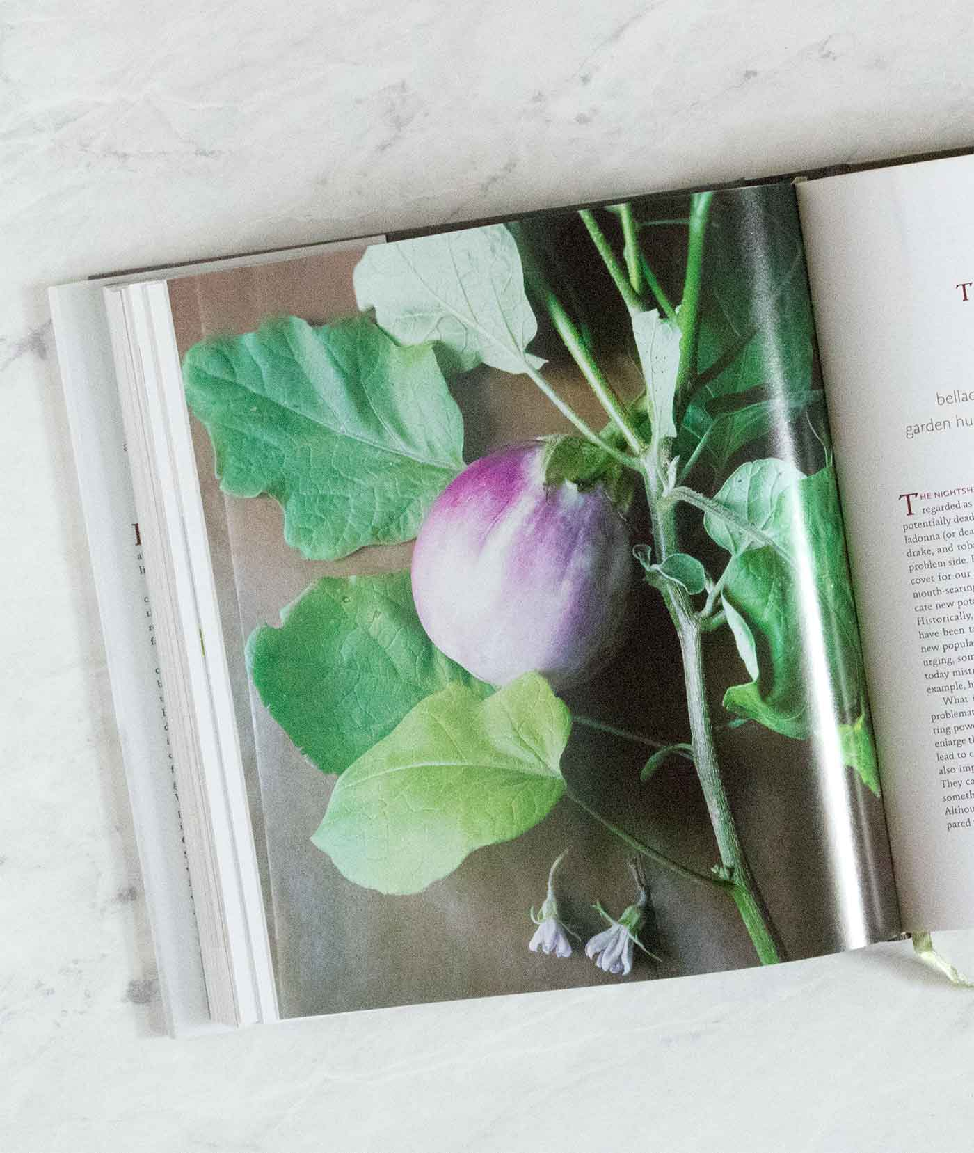 Favorite Vegetarian Cookbooks
