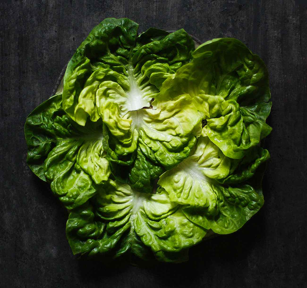 Leaves of Boston lettuce arranged in a circle.