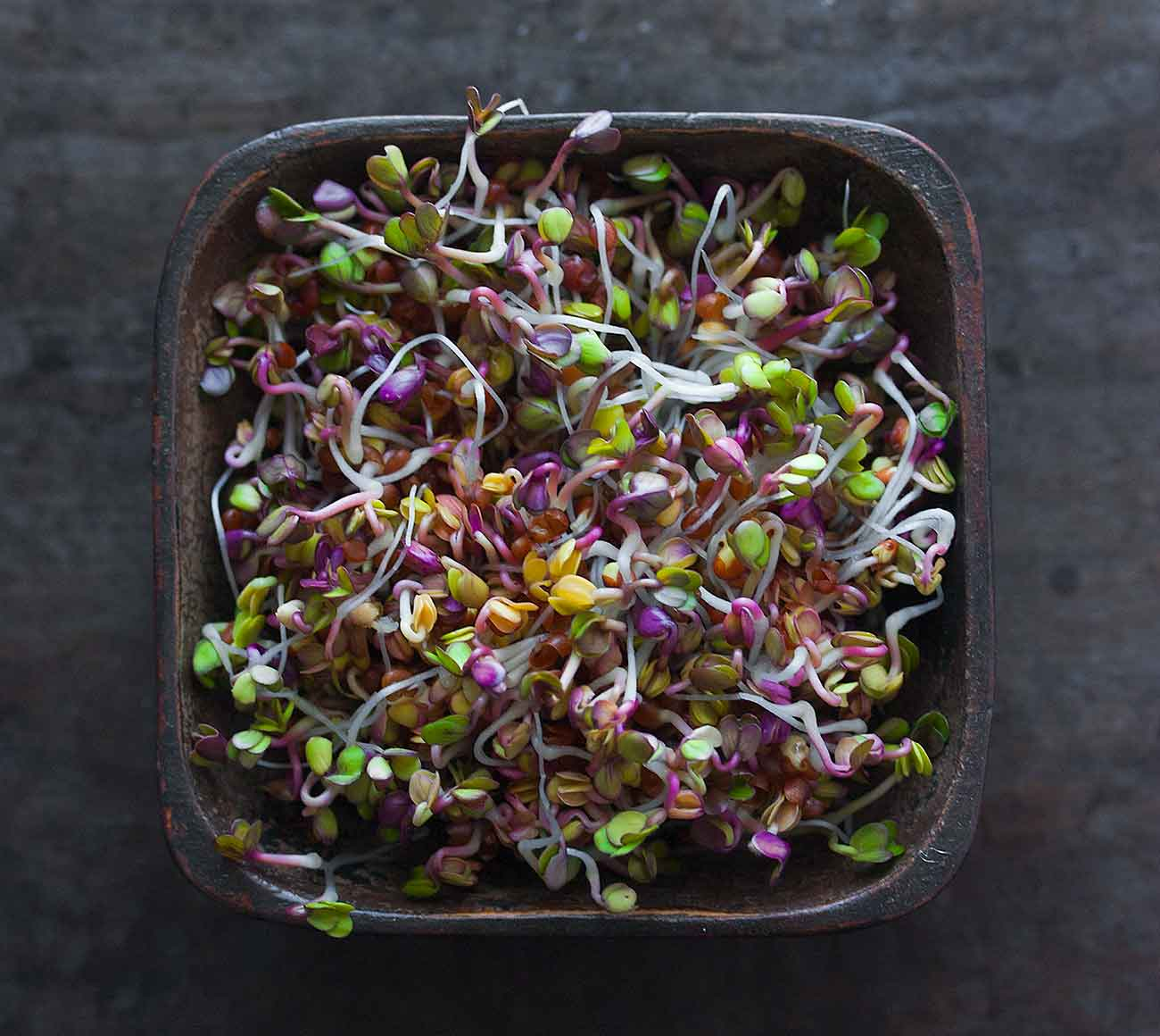 Colorful radish sprouts in a square wooden bowl