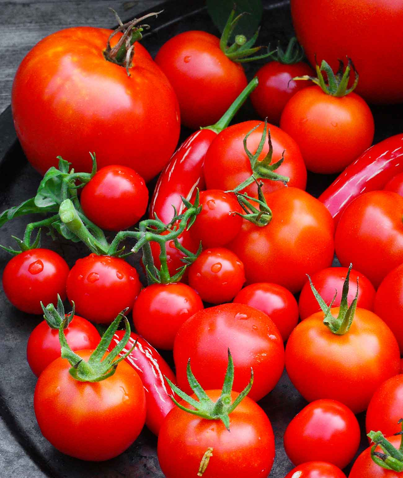 A collection of beautiful, homegrown red tomatoes!