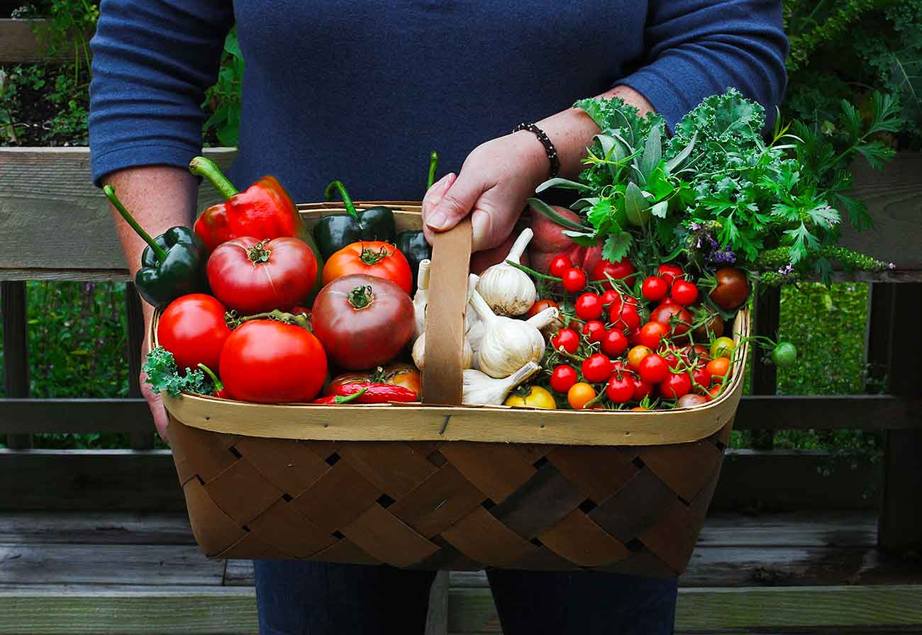 Basket full of beautiful, healthy, homegrown vegetables.